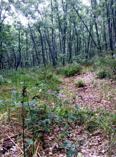 Ingienería Forestal una profesión con futuro en La Vera